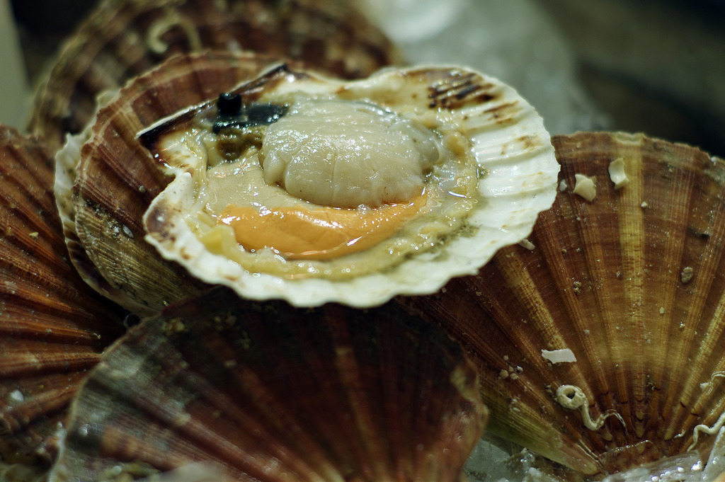 coquille-2